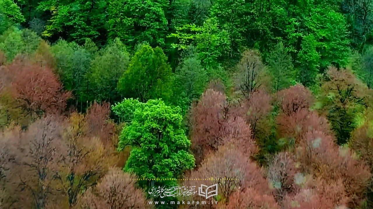 اهمیت درختکاری از منظر اسلام